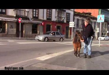 Therapy horse urban training