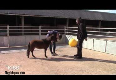 Therapy horse foundation training