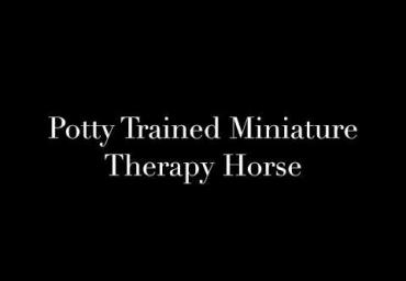 Potty trained therapy horse